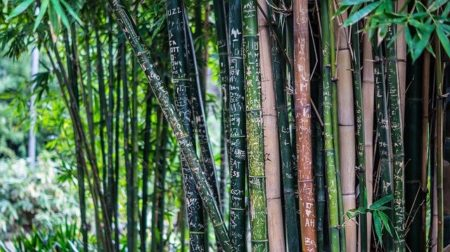 photo de bambou