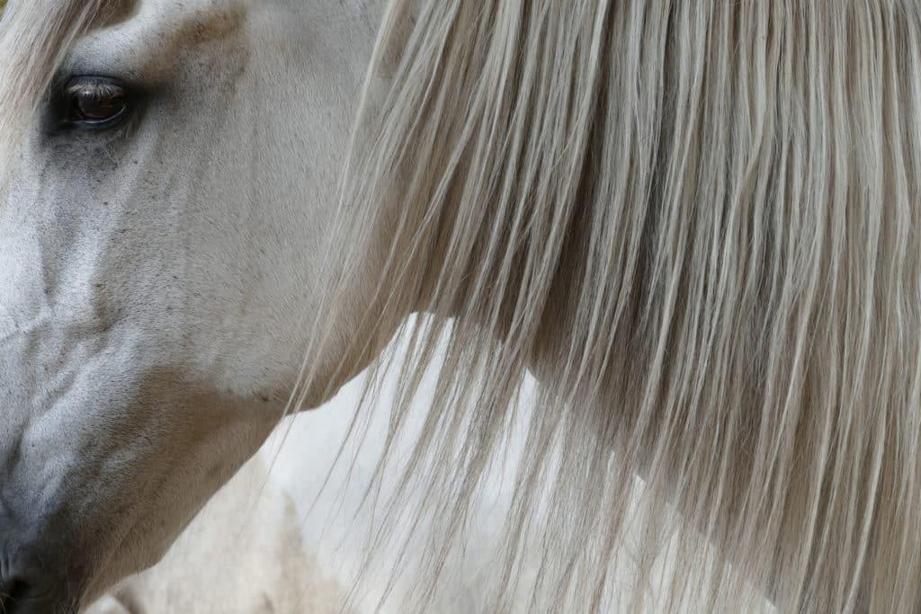 Qu'est-ce que le crin de cheval ?