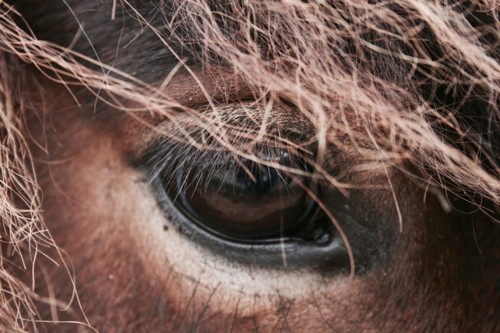 Quel est le procédé utilisé pour fabriquer des bijoux en crin de cheval ?