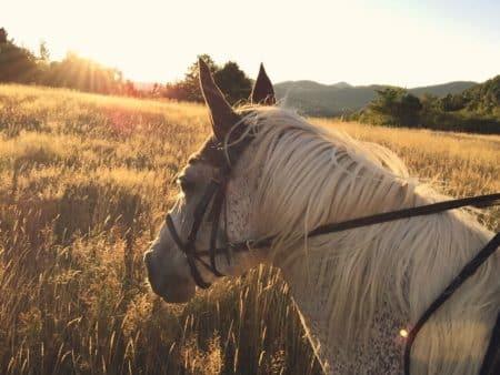 Tout savoir sur les bijoux en crin de cheval